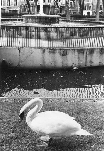 Square gambetta 1978 2.jpg